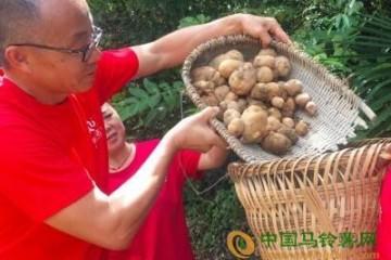 恩施:给土豆插上互联网翅膀 ()