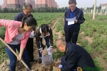 朔州市农委开展马铃薯调查工作 ()