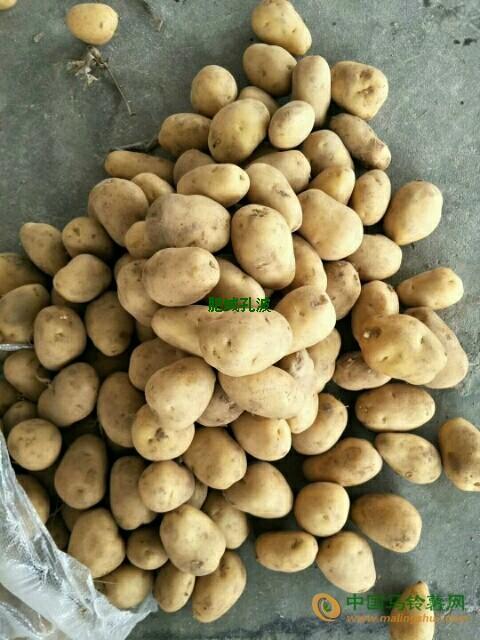大量供应三级土豆 ()