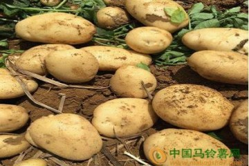 简析丽薯6号的价格趋势 ()