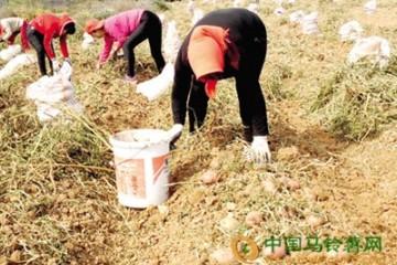 山西:让机械化助力土豆种植业
