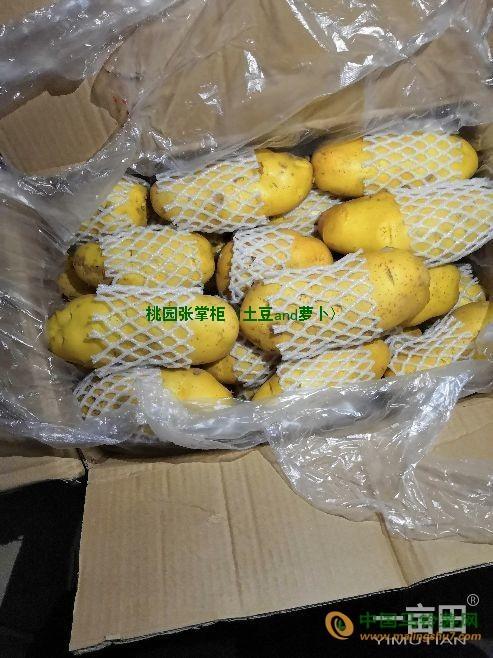 大量供应肥城一级土豆 ()