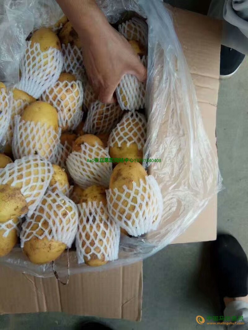 大量供应冷库储存荷兰欢迎精品土豆 ()
