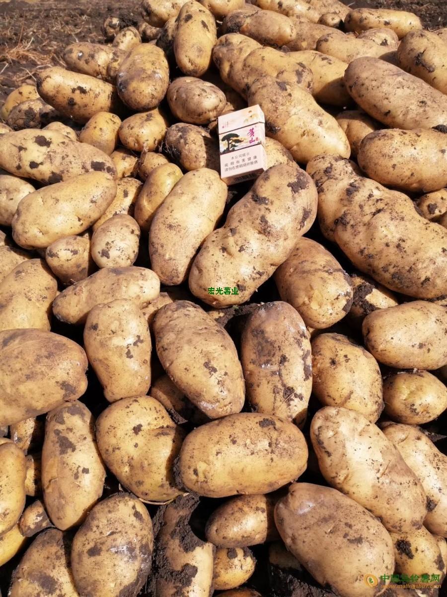 本人有一千亩地土豆要出售,价格便宜,品质有保障 ()