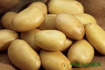 新疆:走有机土豆致富之路 ()