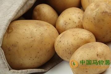 张家口:多种蔬菜价格回落 ()