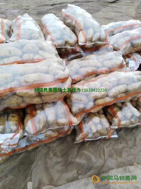 大量收购各种土豆 ()