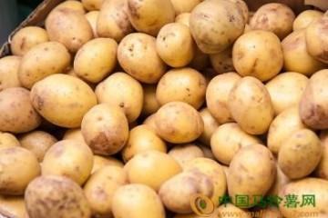 重庆:加快马铃薯标准化生产进程 ()