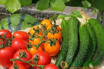 合肥:应对大雪天气蔬菜储备预案 ()