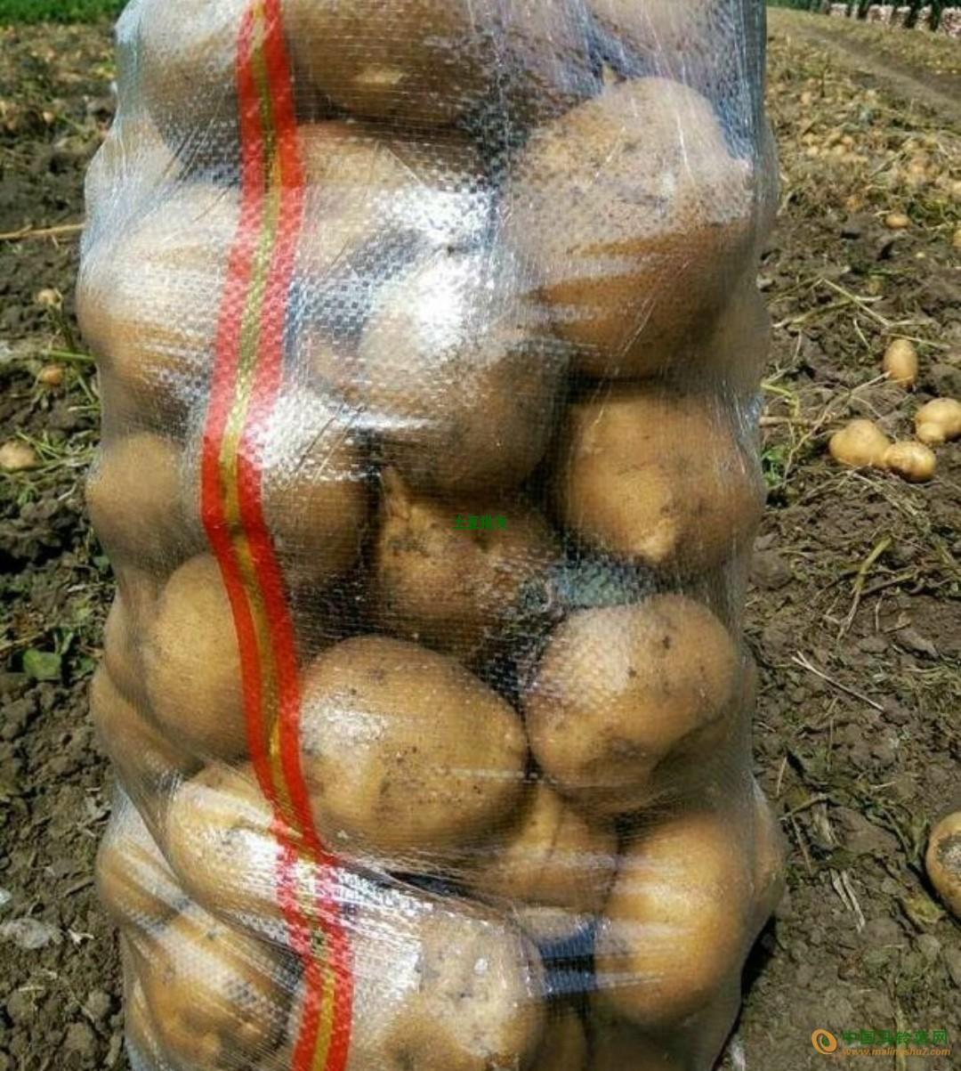 寻求产地土豆供应商 ()