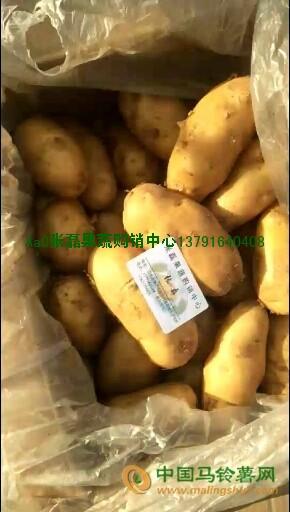 精品冷库荷兰系列黄心四两通天裸体箱装土豆 ()