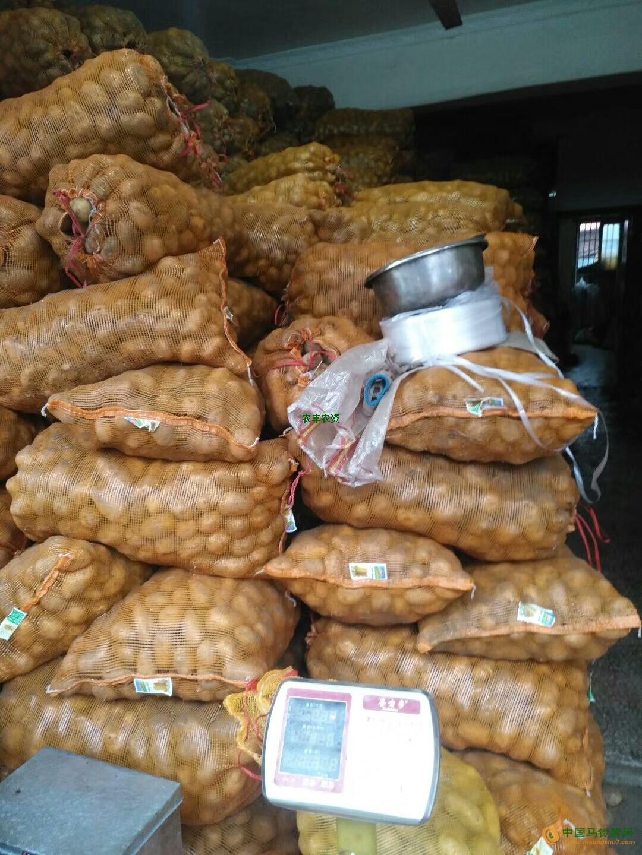 常年大量收购小土豆1一3两的 ()