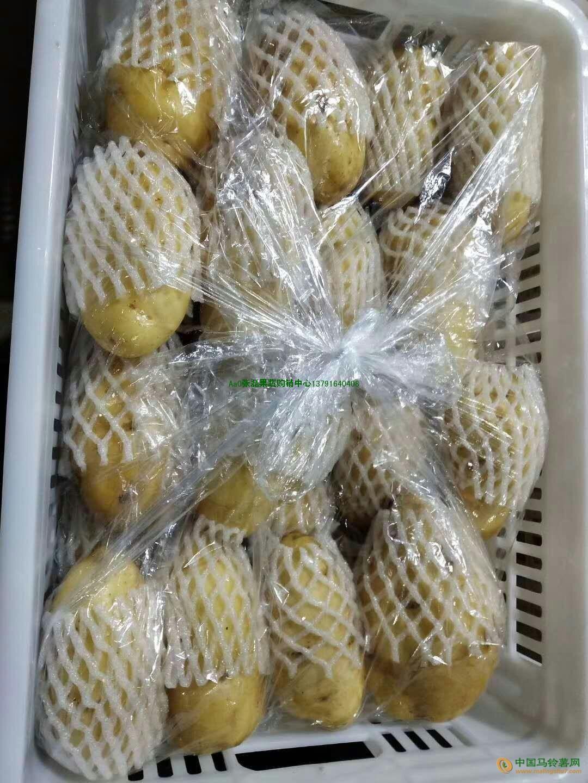 优质冷库荷兰系列土豆大量供应 ()