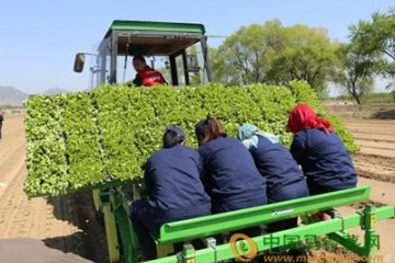 青岛:大力推动蔬菜种植机械化 ()