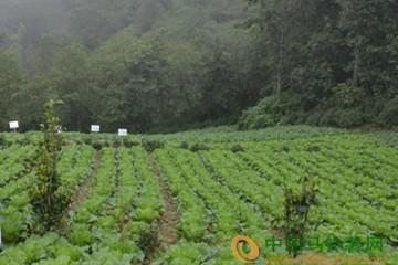 河北:雨雪天气菜农应注意蔬菜长势 ()