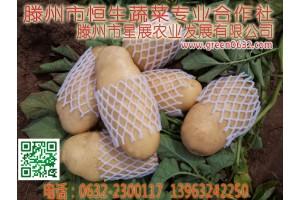 山东滕州土豆价格