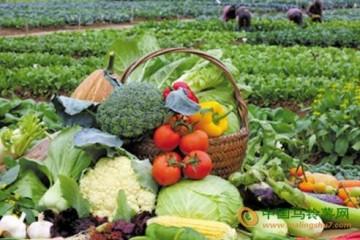合肥周谷堆市场菜价回落