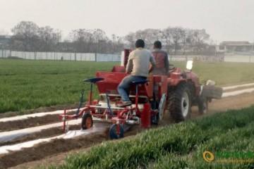 马铃薯机械种植效率提升明显
