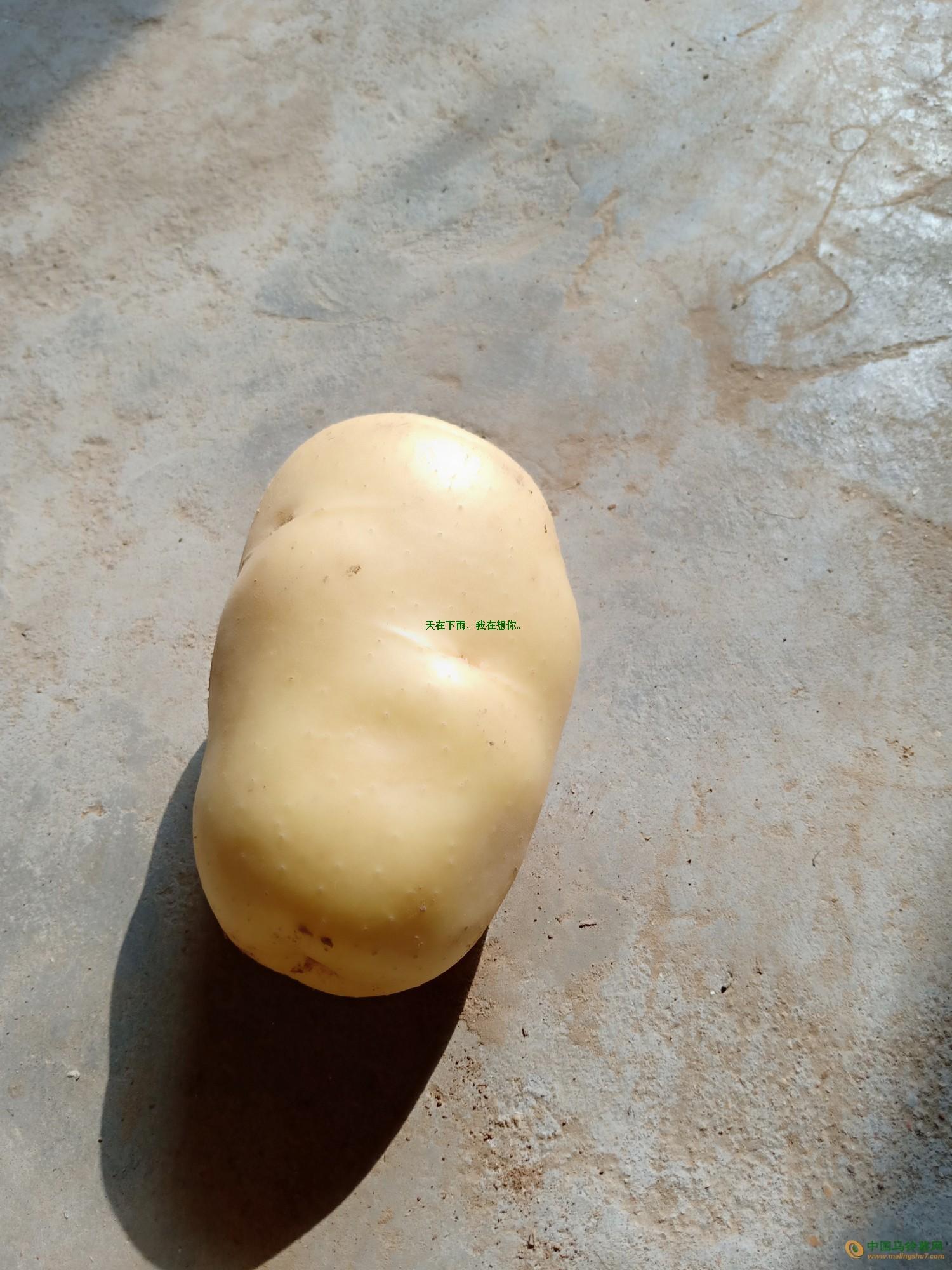 平膜黄心土豆 ()