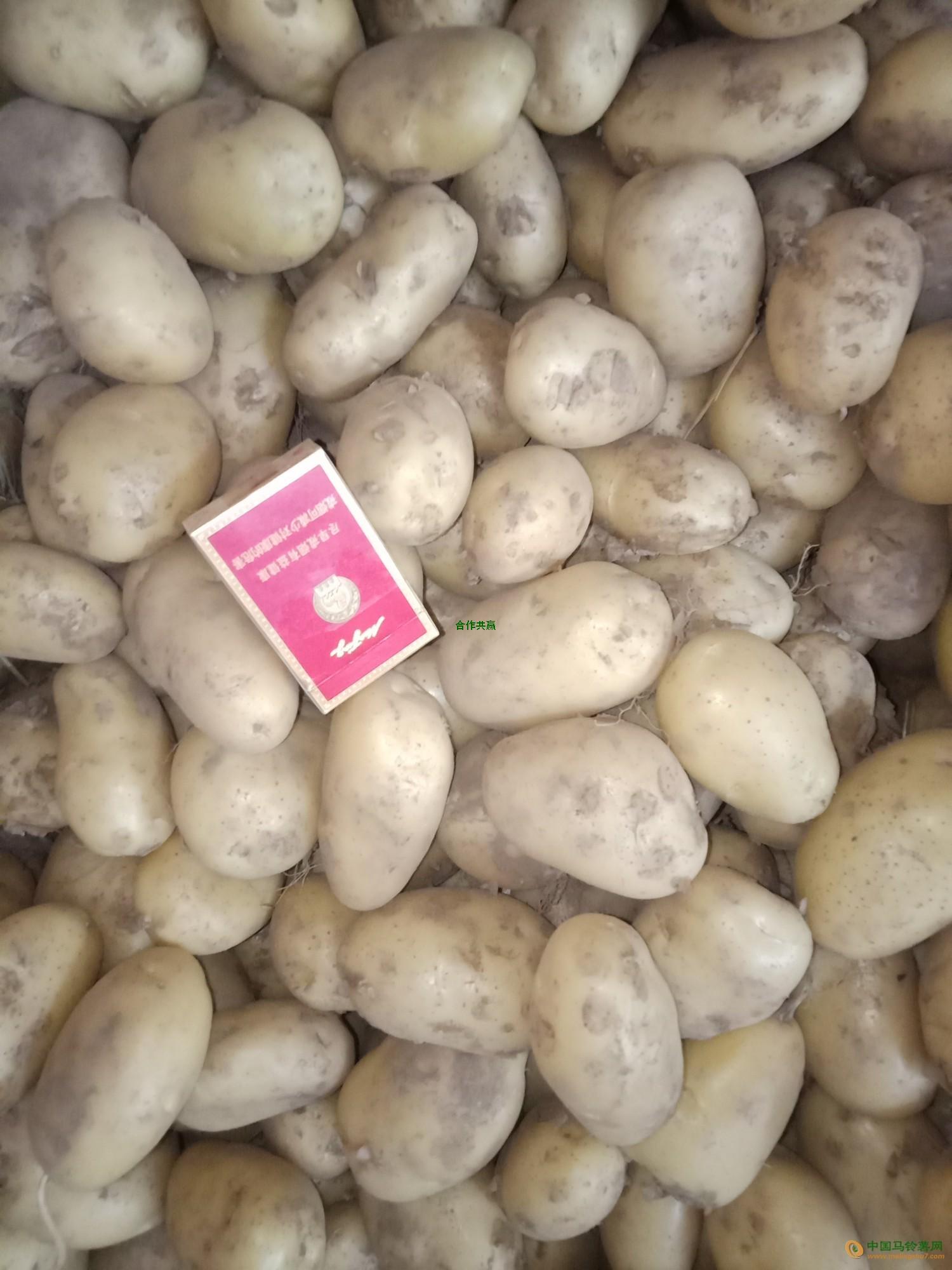 荷兰15土豆 ()