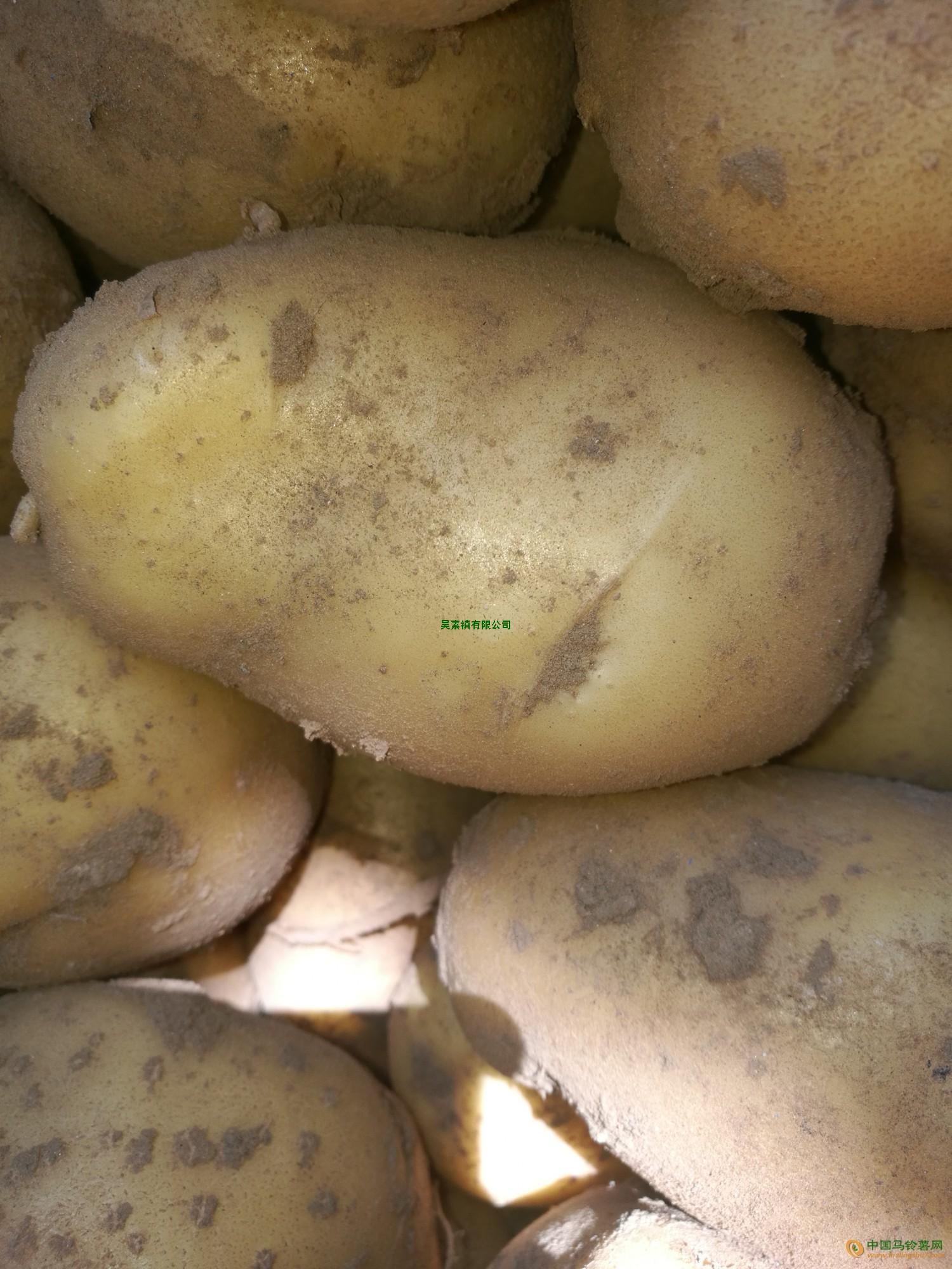 荷兰土豆 ()
