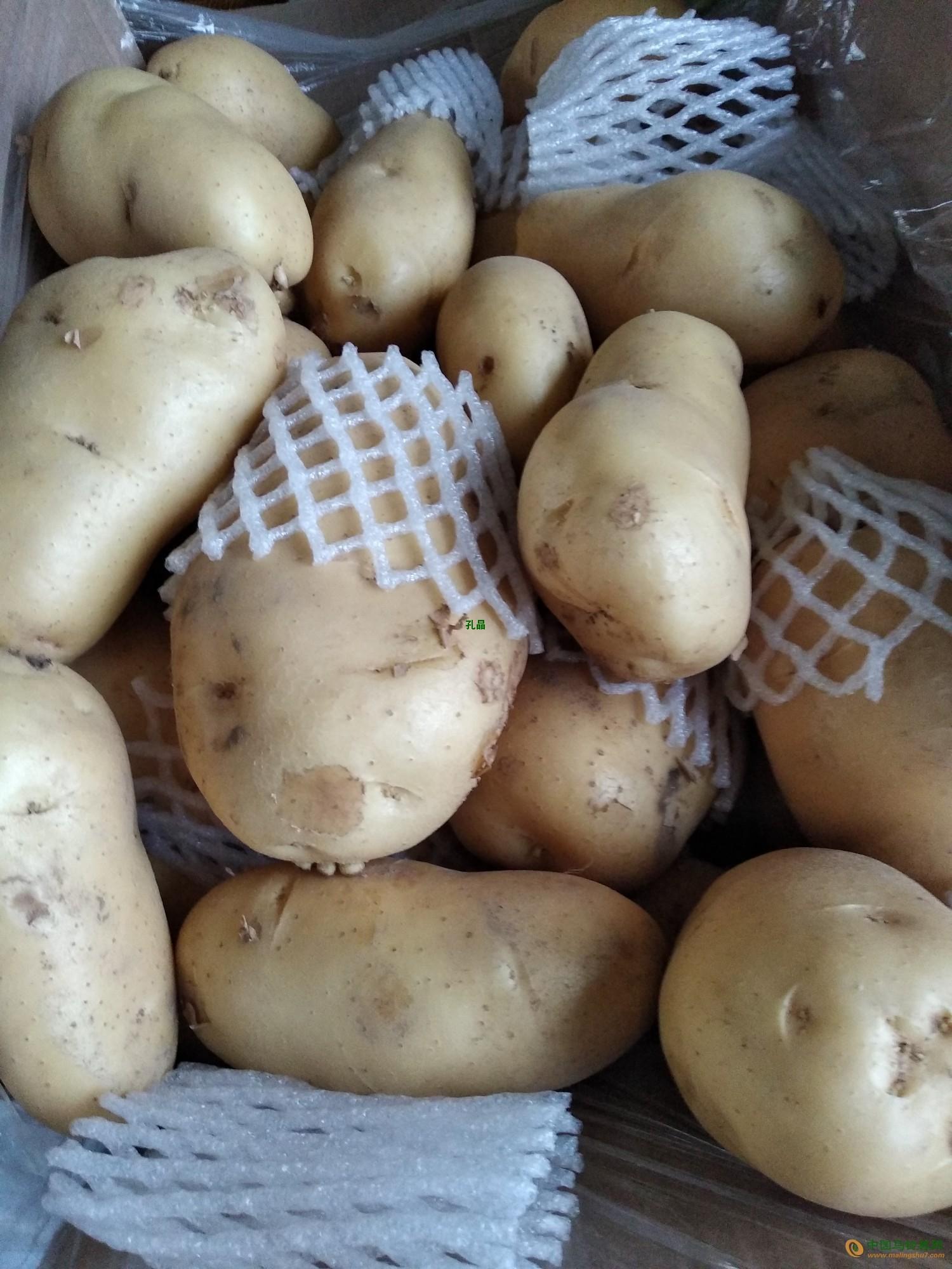 滕州土豆,新鲜土豆,陆地土豆,自家种植 ()