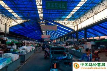 滨州:台风过后,绿叶菜价格翻番涨