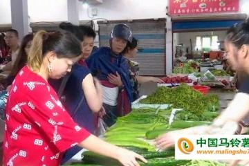 浙江:台风过境,菜价小幅上涨