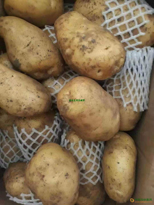 求购荷兰土豆 ()