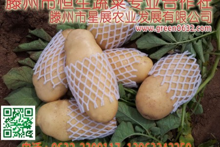 山东滕州土豆展示