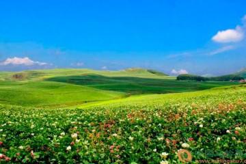 贵州威宁:马铃薯向产业化发展 ()