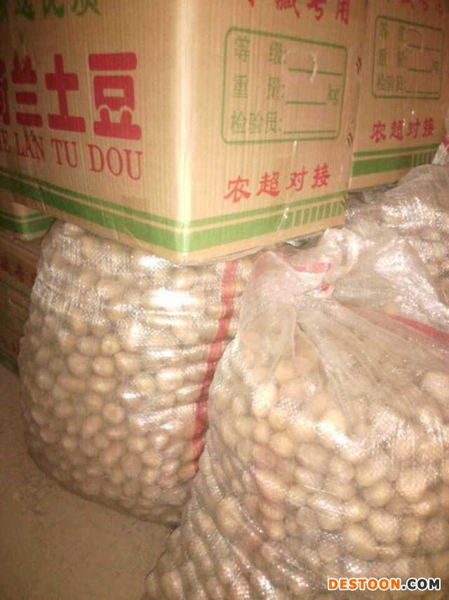 常期供应各种规格迷你土豆 ()