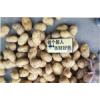 大量供应:市场批发,超市采购,食堂,1-3小土豆,2-3土豆