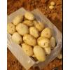本人大量供应丽薯6号合作88