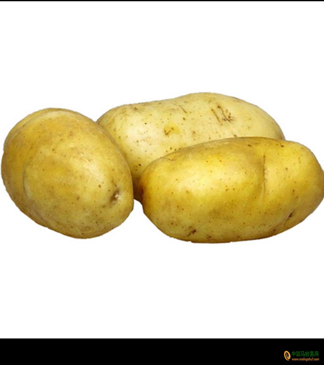 本人大量出售陆地土豆 ()