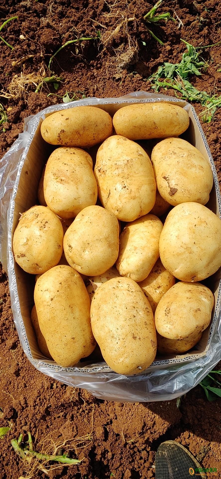 大量提供丽薯6号19987696940 ()