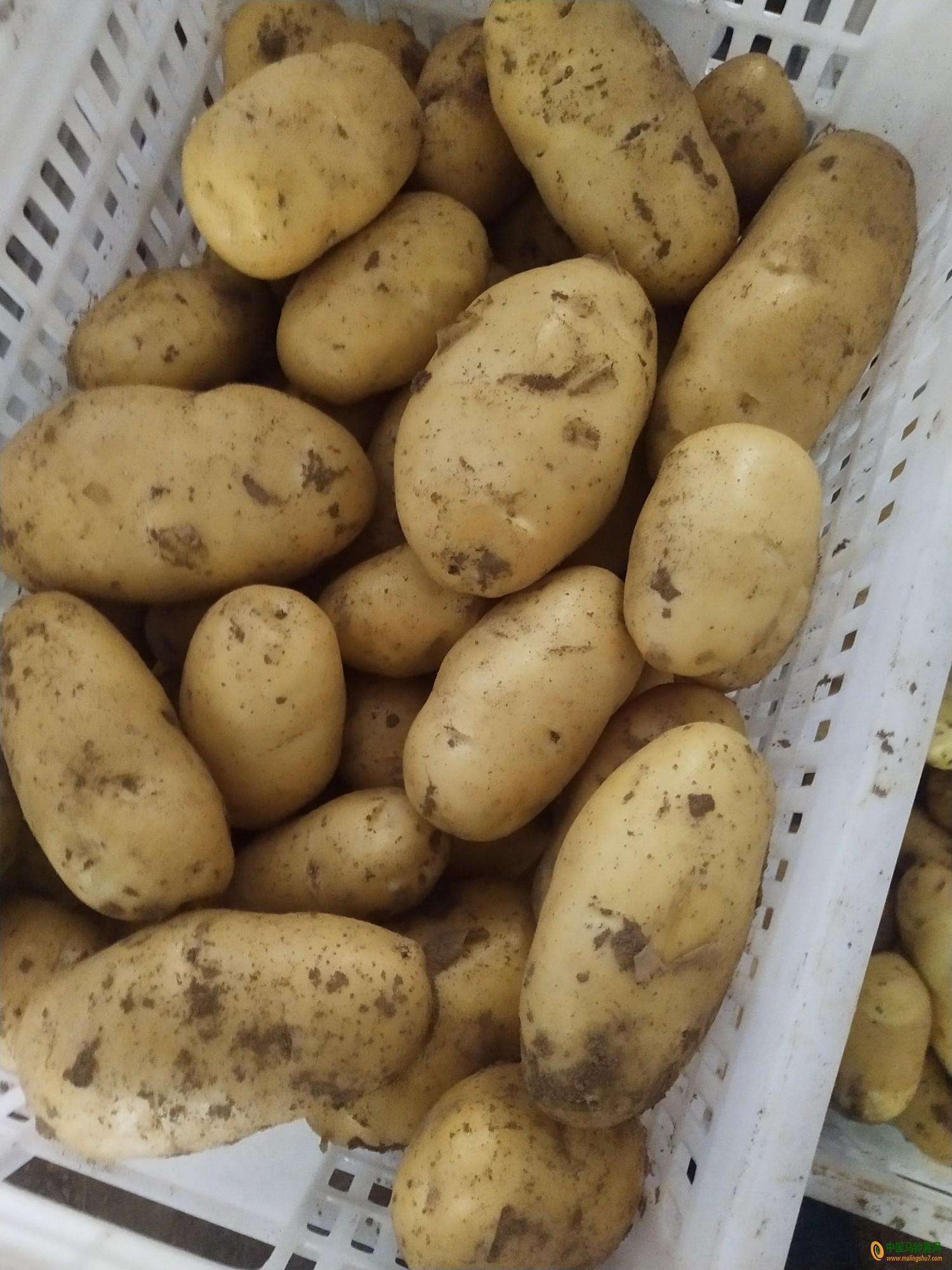 求购土豆400吨,要求薯形好,黑土地 ()