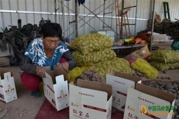 石家庄:五彩富硒土豆带领农民增收致富