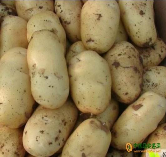 本人求购大量土豆 ()