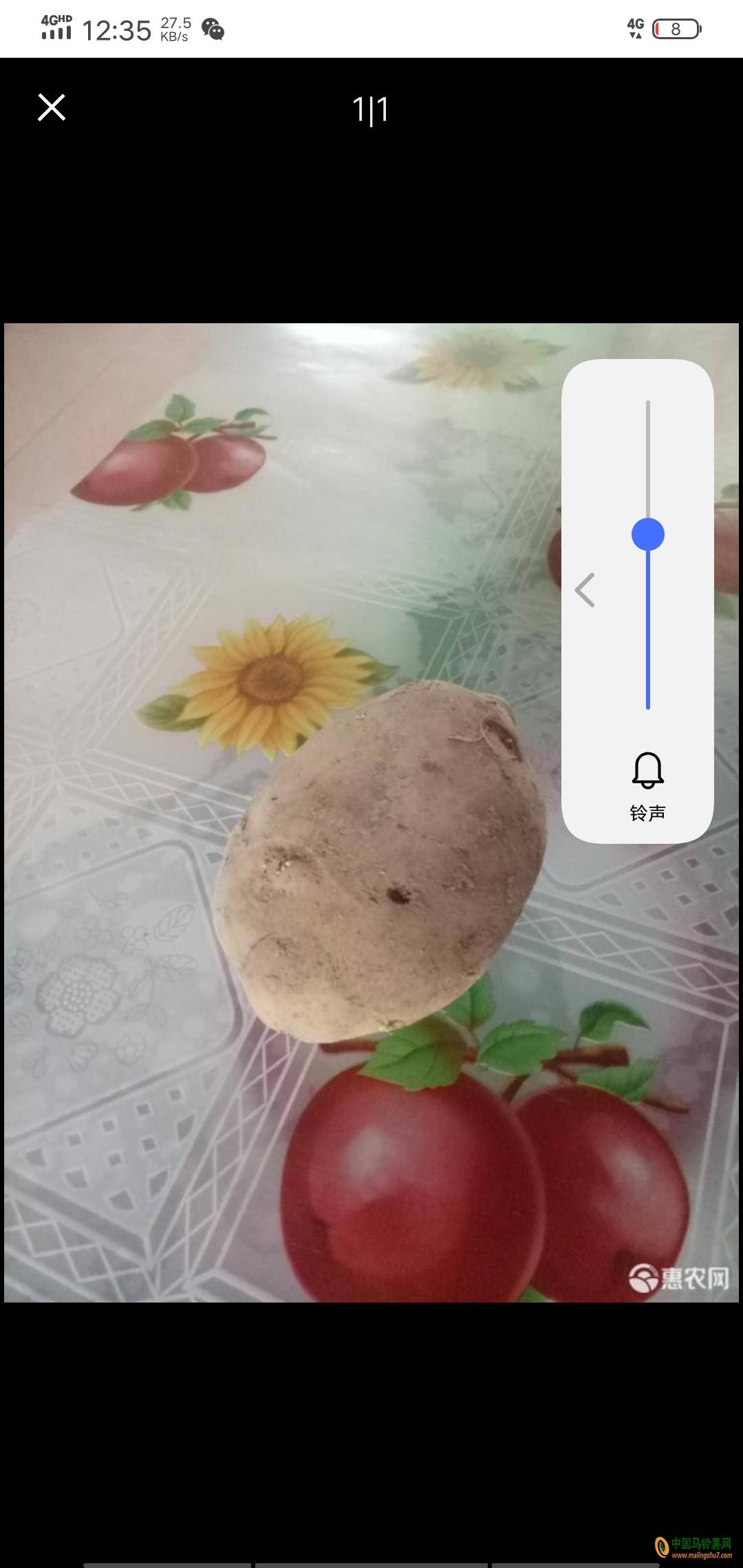本人大量求够大白花土豆有的联系我13028772296 ()