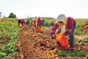 秦川镇发展订单农业实现种销两旺