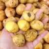 求购小土豆