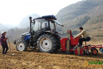 沿河:发展11万亩马铃薯