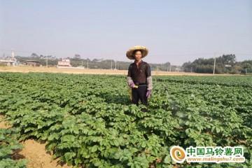 三里镇:招商引资种植马铃薯 ()