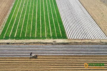 枣庄:2.8万亩土豆进入春种期