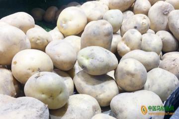 庆阳:马铃薯适时播种