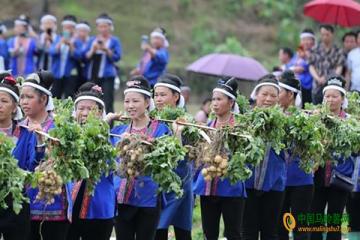 柳州:举办首届土豆节庆丰收