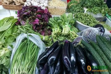 日照:蔬菜价格以降为主