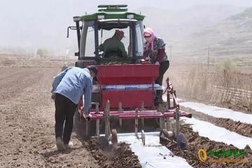 观庄:全力开展马铃薯播种工作