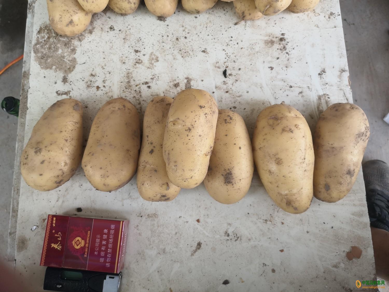 本人种植30亩土豆已收货 ()
